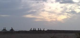 Pe faleza marii - alergare in Mangalia