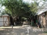 Scoala de Echitatie Campina - echitatie in Campina | faSport.ro