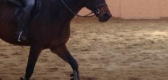 Echitatie Napoca Sport Horse - echitatie in Cluj-Napoca