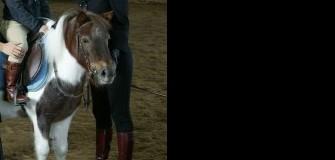 Clubul privat ARKADIA HORSE - echitatie in Snagov